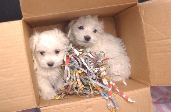 Wien Illegaler Haustierverkauf Im Internet Tiere Sind Kein Geschenk
